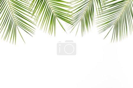 Photo pour Feuille de palmier vert tropical sur fond blanc . - image libre de droit
