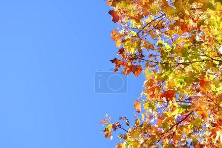 Photo pour Branches d'arbres avec feuilles d'automne sur fond bleu ciel - image libre de droit