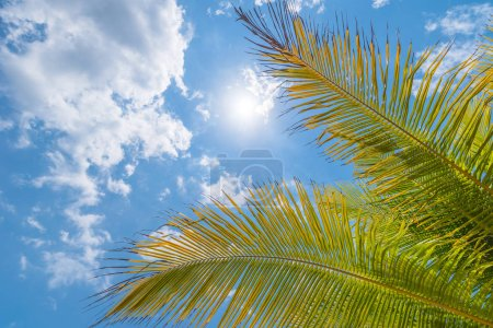 Beautiful tropical natural background with palms leaves and sun in the blue sky. Travel concept