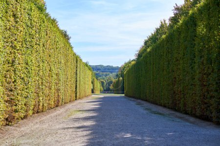 Garden of Versailles Palace with tall bushes. Paris, France