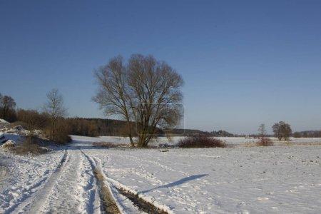 Foto de Camino de tierra cubierto de nieve conducen al árbol en la pradera en la zona rural - Imagen libre de derechos