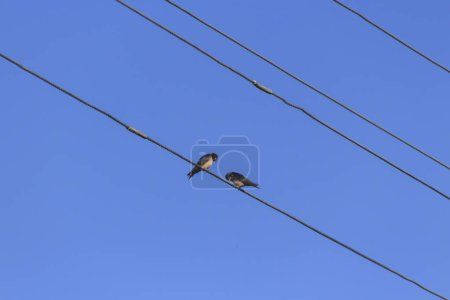 Bird on electric wires against blue sky...