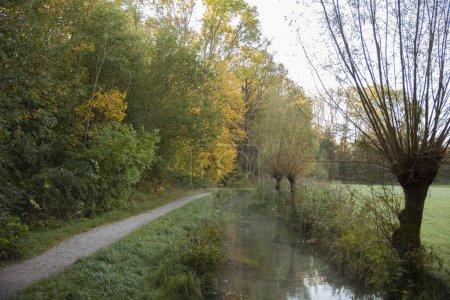 Photo pour Vue panoramique de la forêt à l'automne - image libre de droit