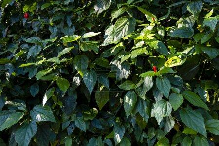 Foto de Follaje de la selva tropical, Fondo de naturaleza de hoja verde oscuro. - Imagen libre de derechos