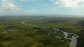 Aerial view of Mangrove forest and river.