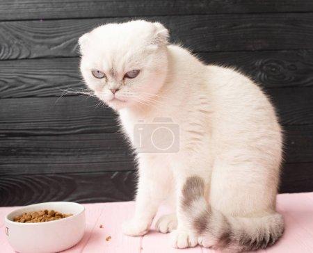 Photo pour Gros plan d'un chat mangeant de la nourriture dans un bol - image libre de droit
