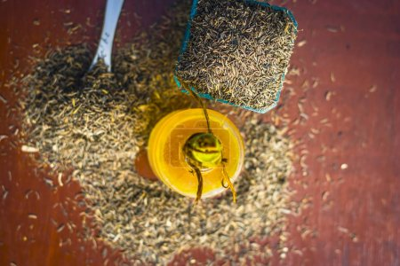 Black cumin seeds, shah jerra, nigella sativa and its extracted oil on wooden surface