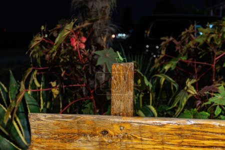 Photo for Mantis on a bench on the evening beach. - Royalty Free Image