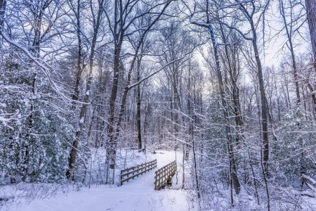 Photo for Rustic old walking bridge covered in snow in a frozen forest winter wonderland - Royalty Free Image