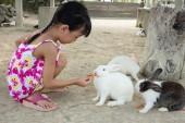 """Постер, картина, фотообои """"Азиатские Китайская девочка, питание кролик с морковью в открытый ферме"""""""