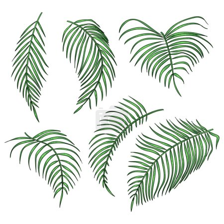 Illustration for Vector palm leaves, jungle leaf set isolated on white background. Tropical botanical illustrations, green foliage, floral elements - Royalty Free Image