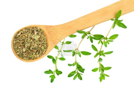 Dried thyme leaves in the wooden spoon, with fresh thyme isolated on white background. Top view