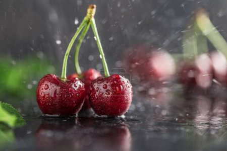 Close view of fresh ripe cherries in water drops on black wooden background
