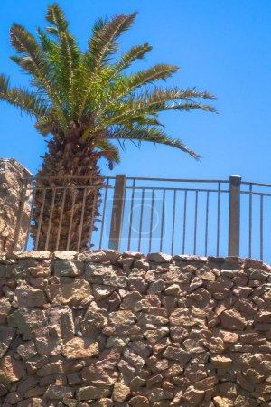 Photo pour Grand palmier près du mur de pierre. Thème tropical. Photo en stock pour la conception - image libre de droit