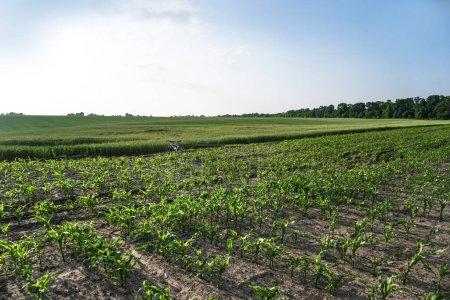 Photo pour Champ de la ferme plantée. Les terres fertiles du secteur agricole. nourriture sur terre noire dans le jardin. Thème du stock industriel - image libre de droit