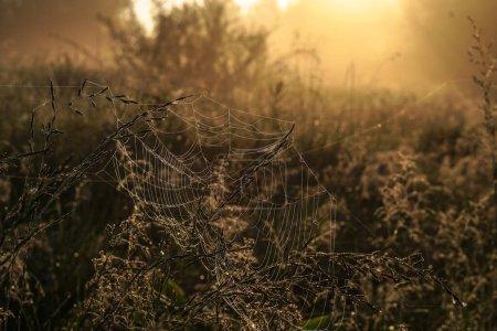 Photo pour Beau paysage matinal dans le brouillard léger et le soleil. Des brins d'herbe et de buissons brillent dans la soirée. Stock nature fond pour la conception . - image libre de droit