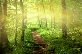 Footpath in forest with sunlight