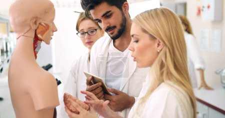Photo for Young students of medicine examining together anatomical model in classroom - Royalty Free Image