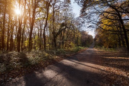 Photo for Picture of narrow road leading through forest at sunlight - Royalty Free Image