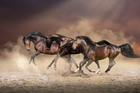 Herd of horses run forward on the sand in the dust...