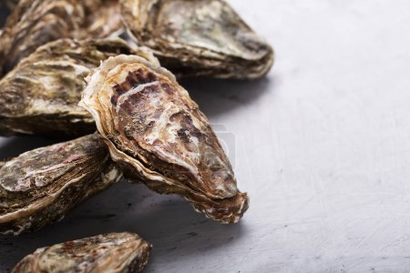 Photo for Oysters on concrete background. Shellfish contains a mass of beneficial micronutrients and vitamins that beneficially affect the entire body - Royalty Free Image