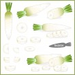 Set of fresh white radish or daikon with green top...