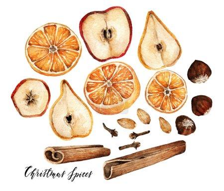 Watercolor elements. Christmas spices for drinks, cinnamon, star anise, cloves, orange, apple, pear, handmade