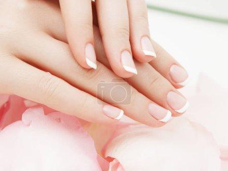 Photo pour Manucure, spa mains belle femme les mains, peau douce, beauté des ongles avec des pétales de fleurs roses roses. Mains de la femme en bonne santé. Salon de beauté. Soin de beauté. Femelle de clous avec belle manucure français - image libre de droit