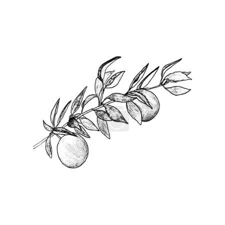 Photo pour Dessin graphique. brindille de prune, lignes noires - image libre de droit