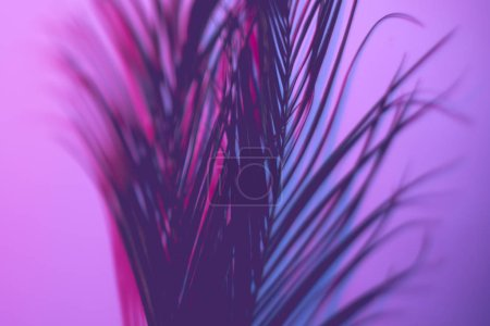 Photo for Neon purple palm leaves. Violet gradient background. Selective focus art concept. - Royalty Free Image