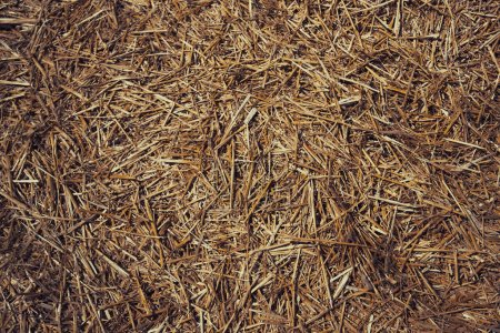 Photo pour Fond de chaume, de foin ou de gazon sec. Foin d'herbe, fond de texture d'herbe. Paille, paille sèche, texture de fond de paille. Fond abstrait par herbe sèche et herbe jaune . - image libre de droit