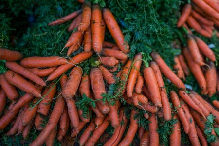 Beautiful fresh bunches of colorful orange carrots with green tops for sale on a display. Farmers' food market stall with organic vegetable. Healthy farm fresh vegetables. Selective focus.