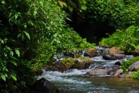 River water rocks in forest river landscape with mountains, forest and a river in front. Beautiful scenery. River stones in forest river water flowing landscape. Stream water flowing past stones.