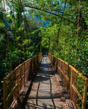 Pedestrian hanging bridge over river in tropical forest in Southeast Asia. Old wooden suspension bridge for walking across river in the rainforest. Suspension bridge. Travel and adventure concept.