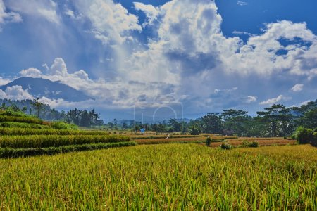 Beautiful landscape view of the yellow rice terraces on the blue sky background. Cultivation and prepare the harvest. Farmlands, village, fields with crops, agricultural land of farmers.