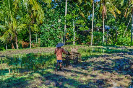 Farmer working with a handheld motor plow in a rice field. Walking tractor, small tractor used for farming, prepare paddy land before planting. Using rover tracers to cultivate on farm. Agriculture.