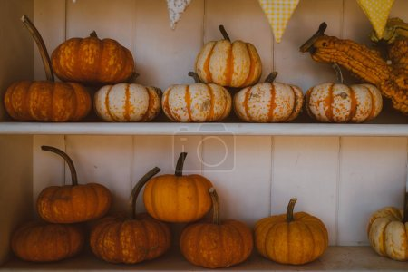 A lot pumpkins at outdoor farmers market. Orange Halloween pumpkins on white planks, holiday decoration. Bright, orange, autumn pumpkins- thanksgiving background. Carving pumpkins for sale at patch.
