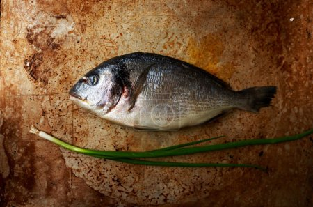 Flavored with fresh sea bass lying on a baking sheet for baking