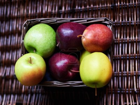 Red, yellow, green apples are in a small wicker basket. Fresh fruit torn from the garden