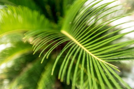 close up of palm leaves at daytime