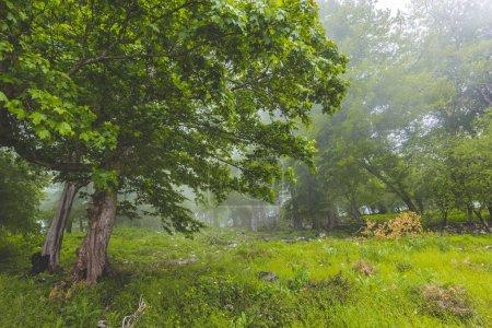 Photo pour Magnifique paysage verdoyant de bois brumeux - image libre de droit