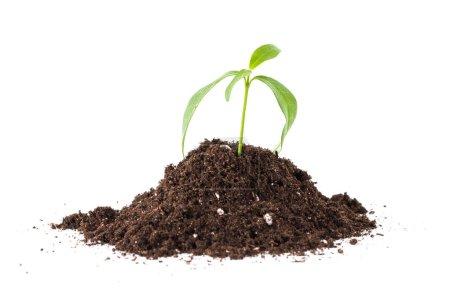Photo pour Jeunes plant dans le sol isolé sur blanc - image libre de droit