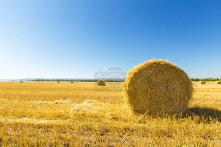 Golden wheat field on blue sky background
