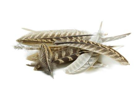 bird feather isolated on white background