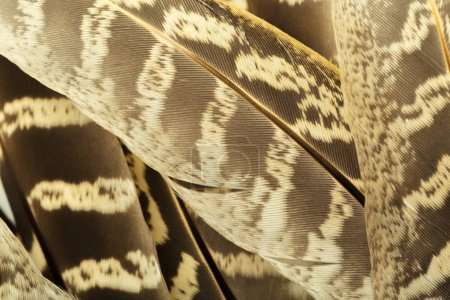 brown feathers background, closeup view