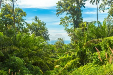 scenic view of beautiful green trees in tropical forest