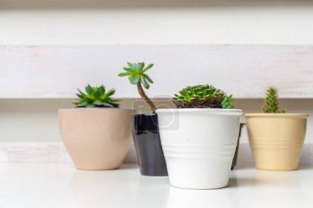 Foto de Pequeñas plantas suculentas en macetas en interior casa - Imagen libre de derechos
