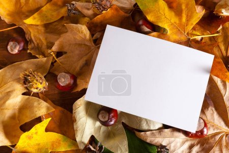 top view of blank paper lying on autumn leaves