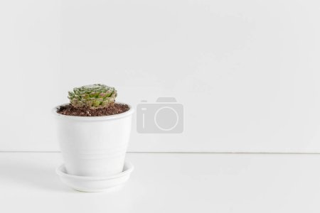 Photo for A single succulent plant potted - Royalty Free Image
