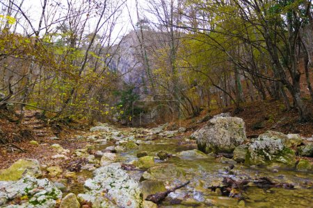 Rapid river in autumn forest in mountains
